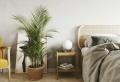 Schöne Pflanzen fürs Schlafzimmer