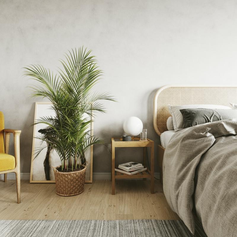 2 steckenpalme welche pflanzen im schlafzimmer moderne einrichtung