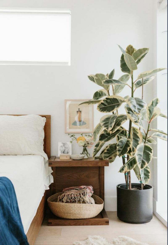 3 gummibaum luftreinigende pflanzen schlafzimmer informationen