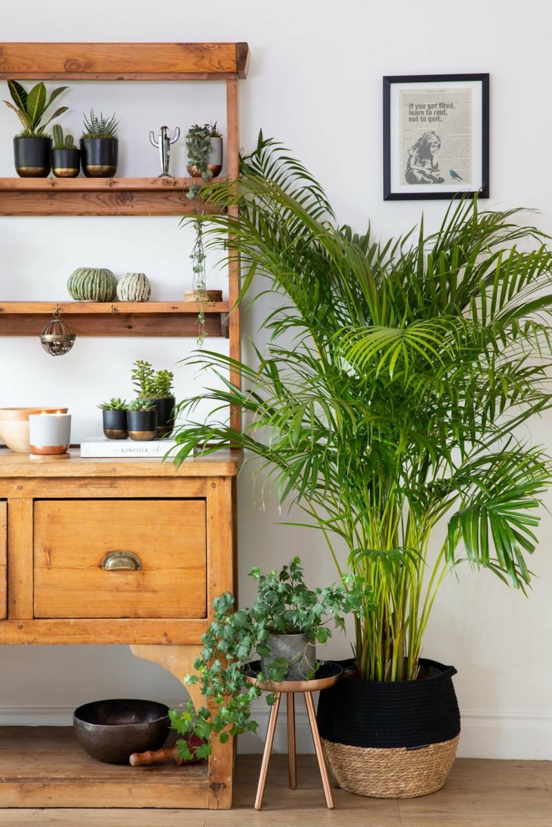 4 goldfruchtpalme schlafzimmer pflanzen luftreinigend