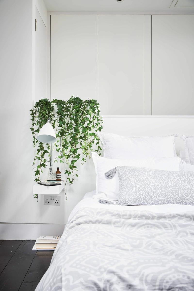5 gemeiner efeu pflanzen luftreinigung schlafzimmer ideen