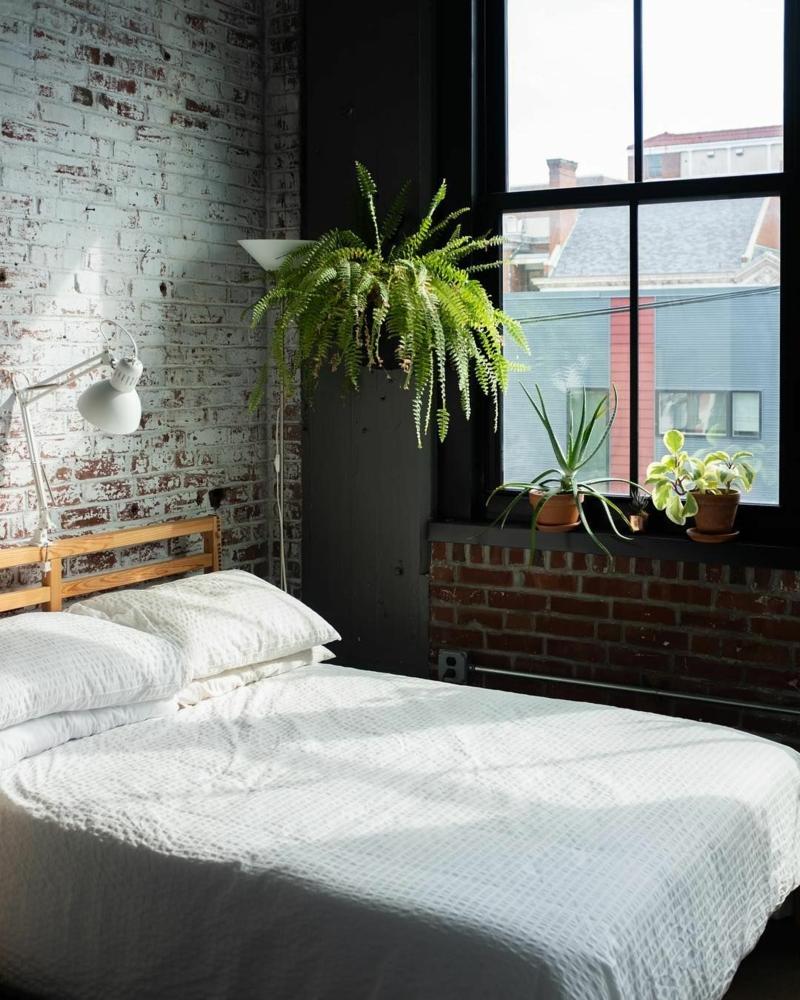 6 industrial style schlafzimmer luftreinigende pflanzen wählen nephrolepis exaltata