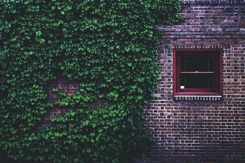 efeu fassade reinigen immergrüner efeu entfernen klinkerhaus