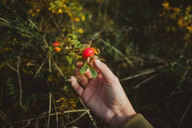 eine hand grüne blätter herbst kleine rote hagebutten