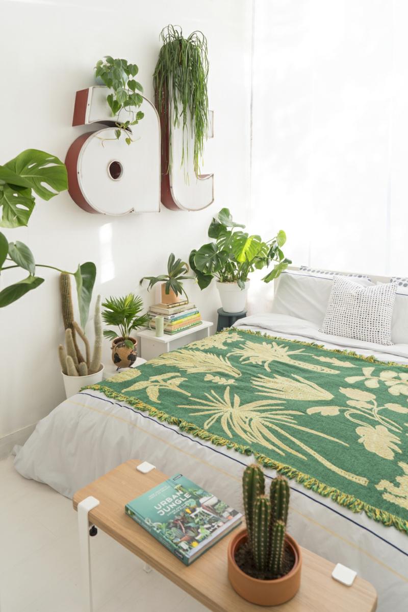 grüne pflanzen und kakteen welche pflanzen im schlafzimmer