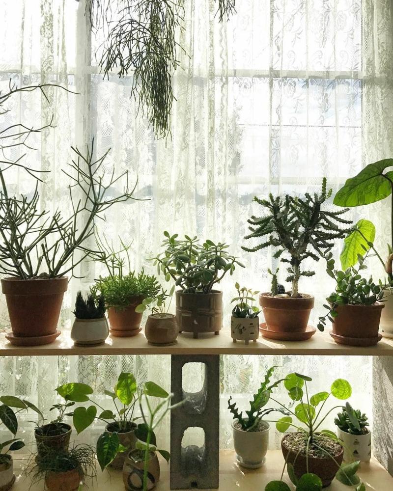 kleine und große pflanzen luftreinigende pflanzen im schlafzimmer