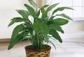 8 Pflanzen, die Luftfeuchtigkeit absorbieren
