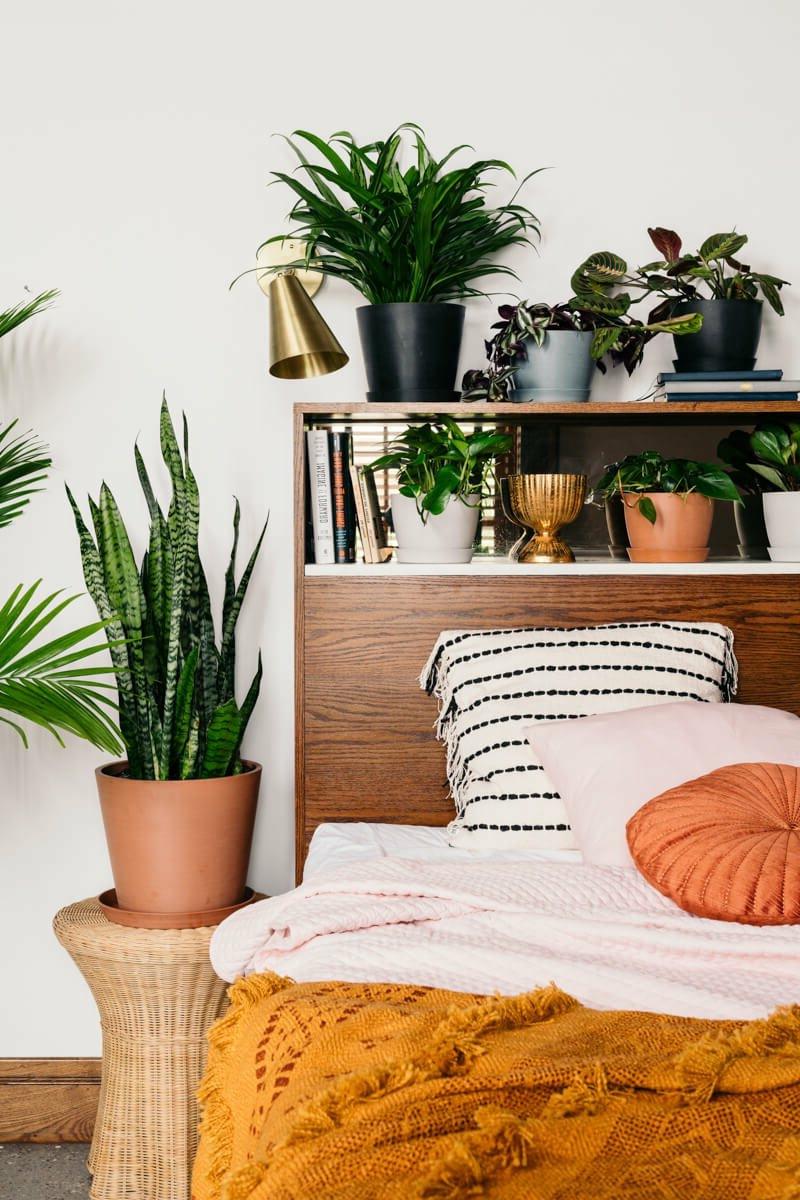 luftreinigende pflanzen schlafzimmer informationen boho chic