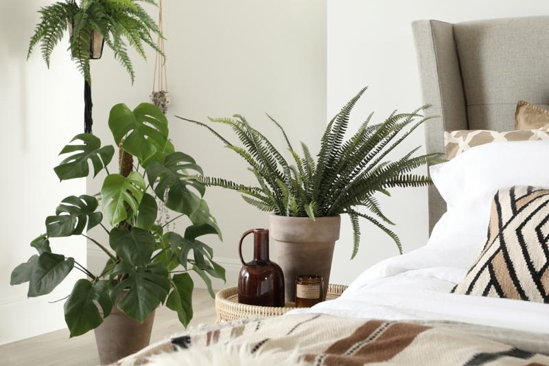 luftreinigenden pflanzen schlafzimmer informationen