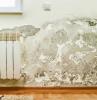 schimmel an der wand entfernen schimmel in der wohnung was tun schwarzer schimmel an der wand heizung