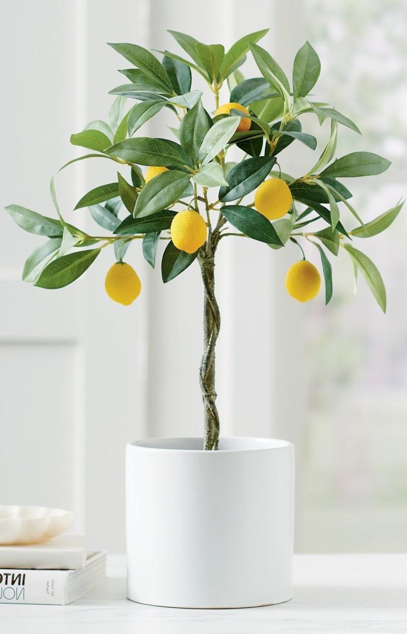 wichtige informationen zitronenbaum pflege im winter