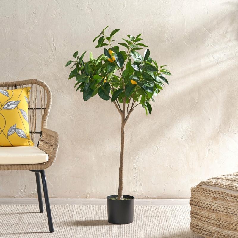 wohnzimmer pflanzen zitronenbäumchen überwintern