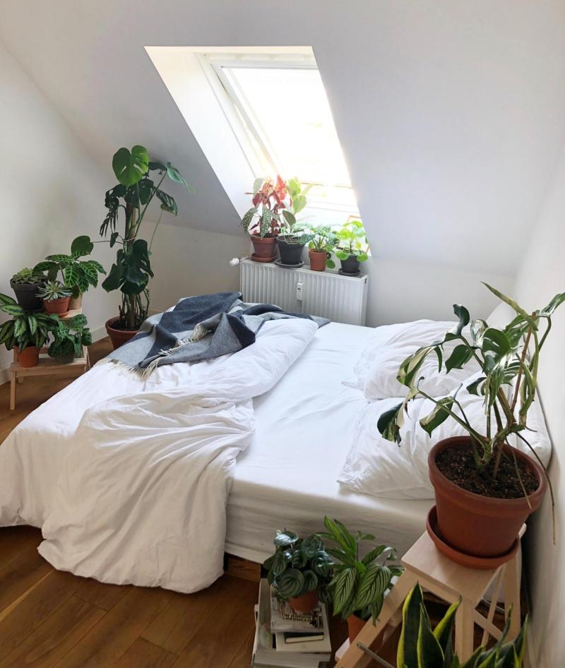 zimmer mit vielen pflanzen luftreinigung minimalistische einrichtung